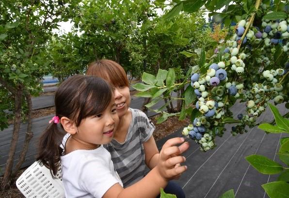 Ukawa Blueberry En
